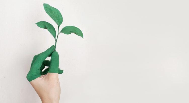 Start-up green